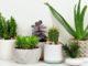 pourquoi mettre des plantes chez vous quels sont leurs bienfaits