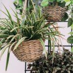 quelles sont les meilleures plantes pour votre salon